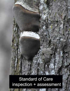 tree-standard-of-care