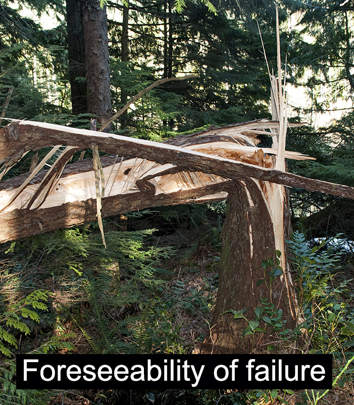 tree-foreseeability-of-failure