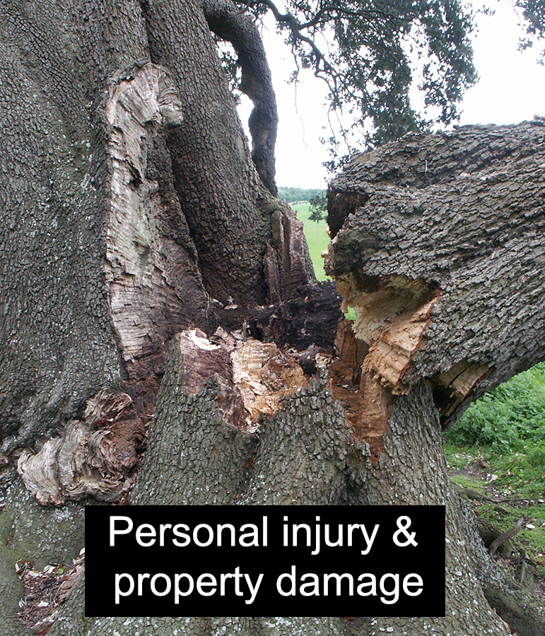 tree-personal-injury-and-property-damage