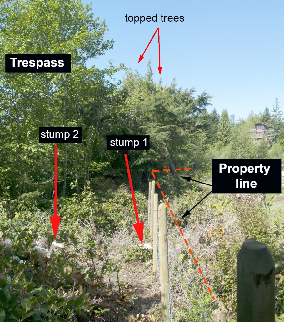 trees-and-bush-trespass-examples